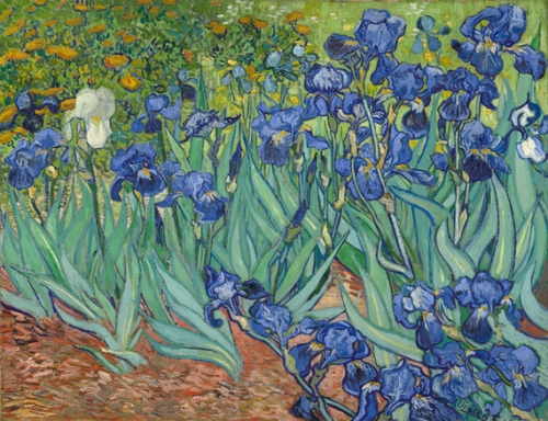 irises_getty-thumb-570x438-129462[1]